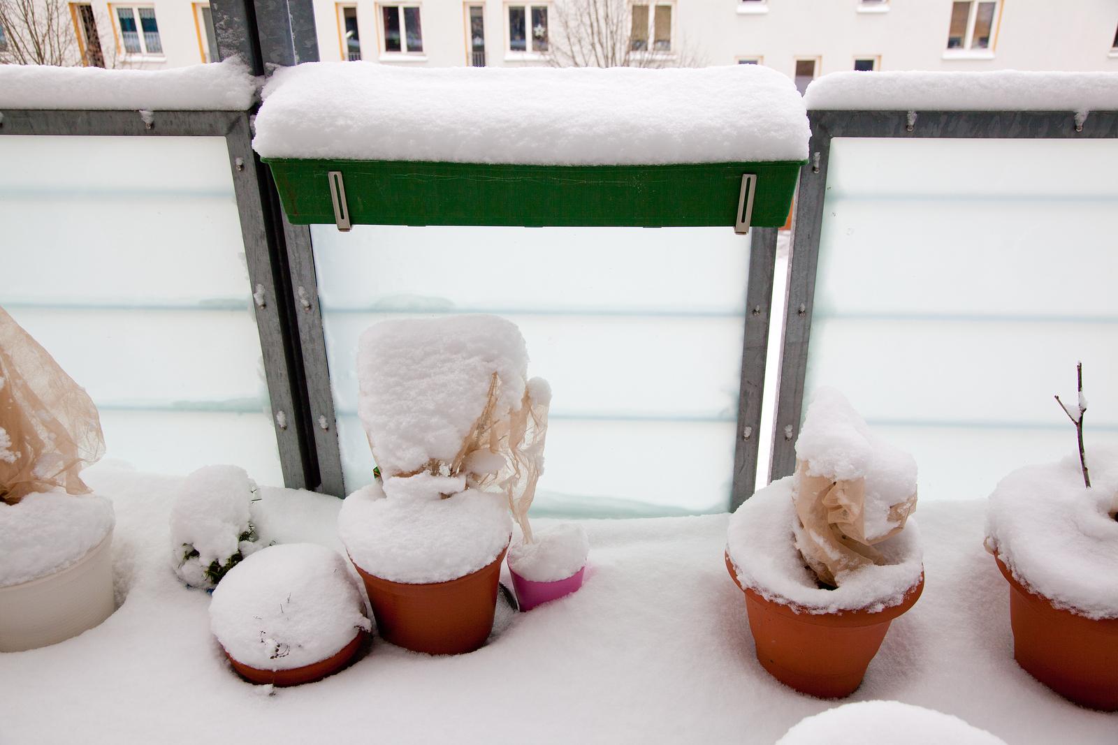 So Machen Sie Ihre Balkonpflanzen Winterfest Wohn Ratgeber De